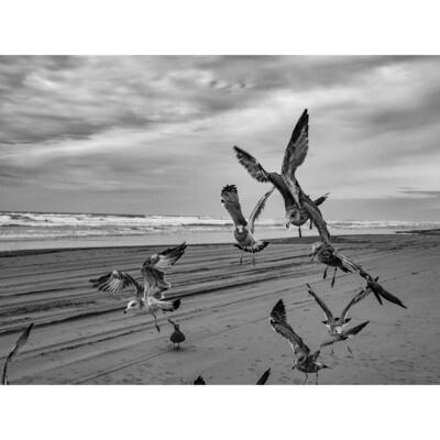 Flyby -- Stephen Zapantis