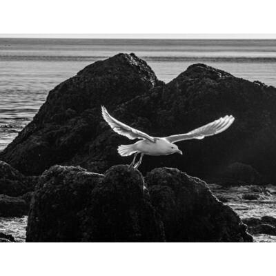 Takeoff -- Stephen Zapantis