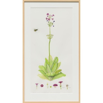 Japanese Primrose and Honey Bee -- Sylvia Portillo