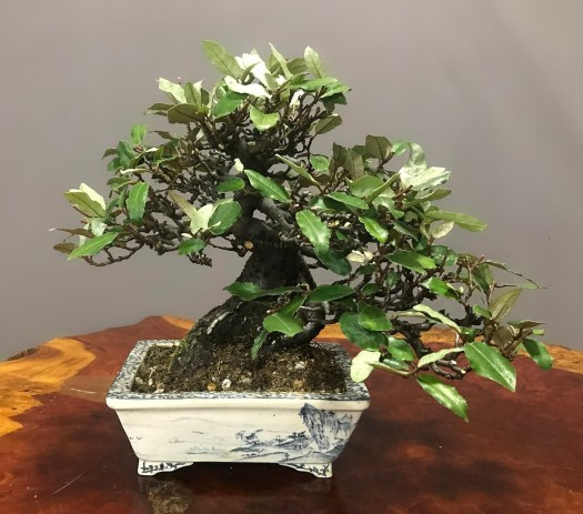 GUMI ' SILVERBERRY' - SOLD -