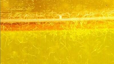 Vinegar Eels. 2 oz