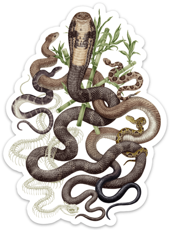 Human-Snake Conflict Sticker