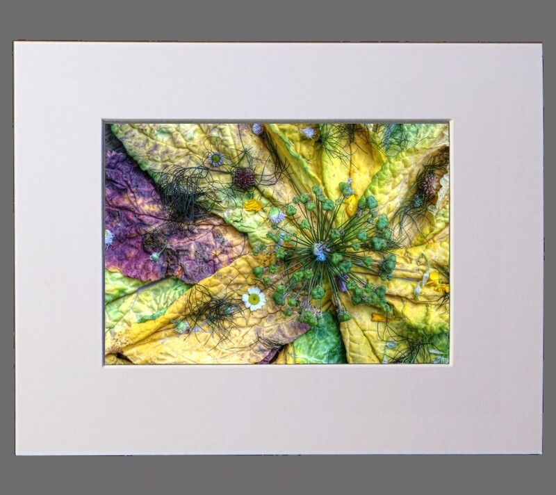 Ancient Star of Allium 8