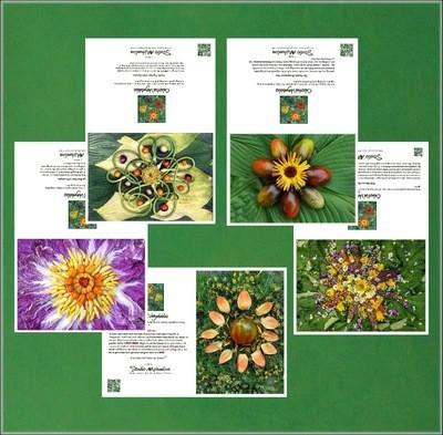 Celestial Vegetable Greeting Card Set # 3