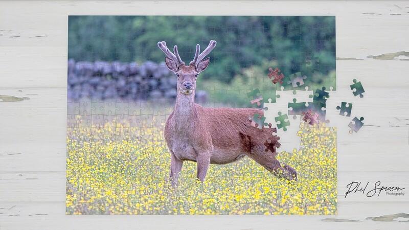 Red Deer 500 Piece Jigsaw