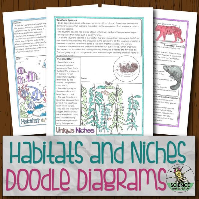 Habitat and Niche Doodle Diagrams