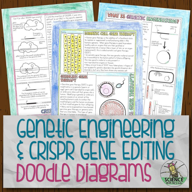 Genetic Engineering and CRISPR Doodle Diagram Notes