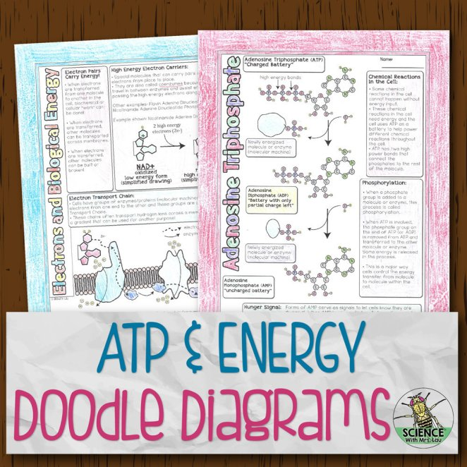 ATP and Energy Doodle Diagrams