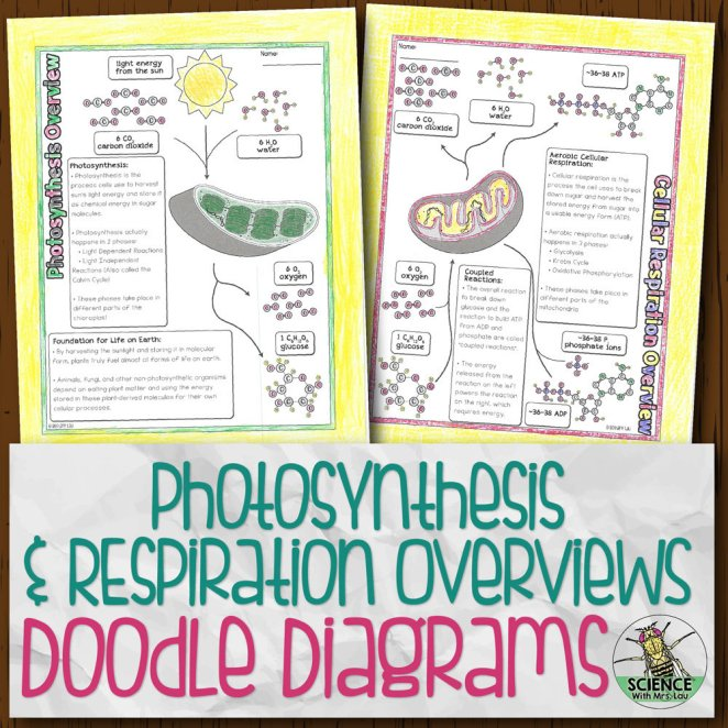 Photosynthesis and Respiration Overviews Doodle Diagrams