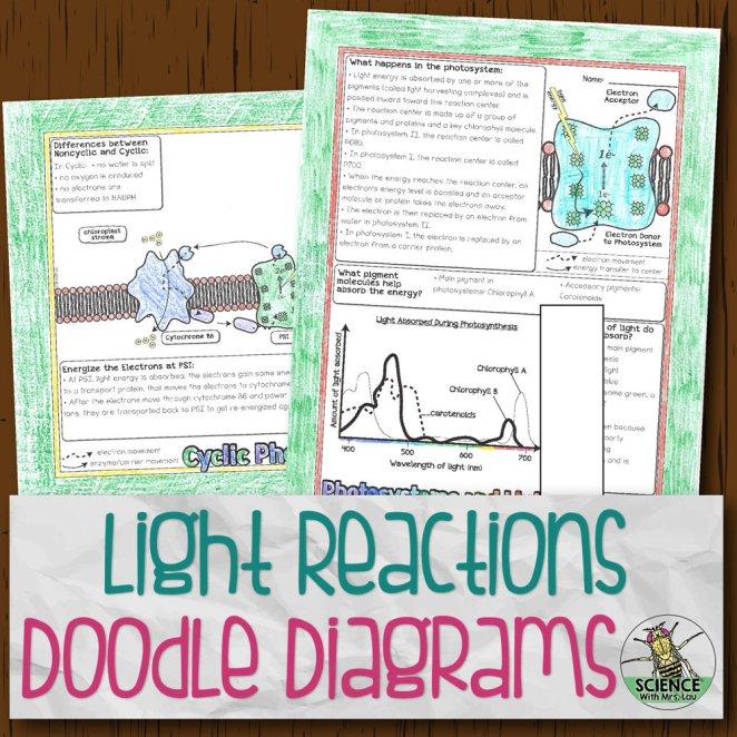 Light Dependent Reactions Doodle Diagrams