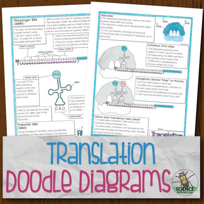 Translation Doodle Diagrams