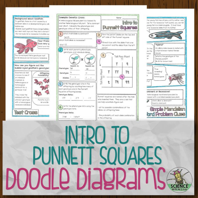 Intro to Punnett Squares Doodle Diagrams