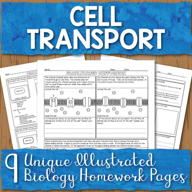 Cell Transport Homework Pages