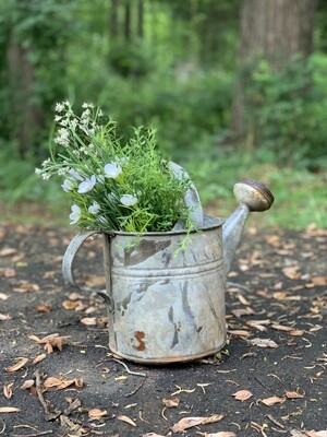 Rusty Can, Vintage Can, Watering Can, Vintage Planter