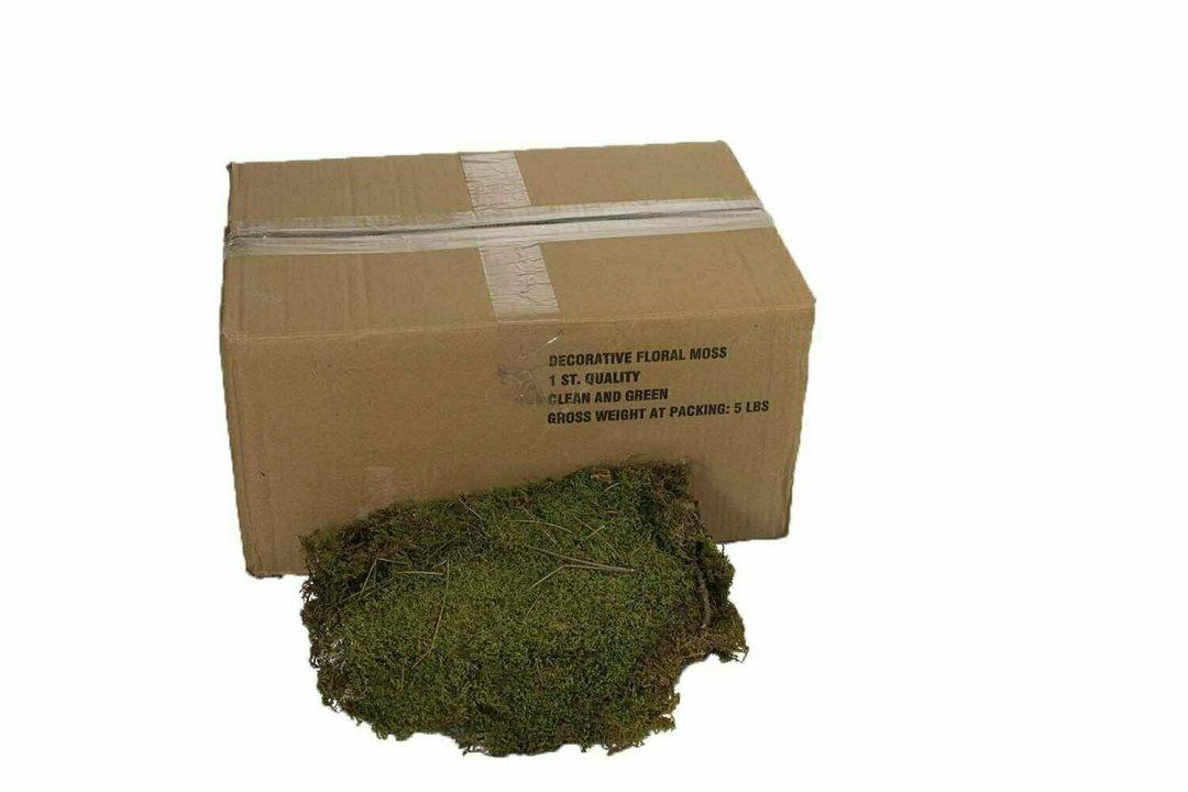 9500 - 5 lb Bulk Perserved Fresh Green Sheet Moss