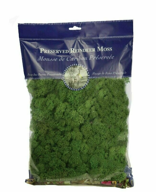 21757 - 1/2 lb Bag Forest Green Reindeer Moss