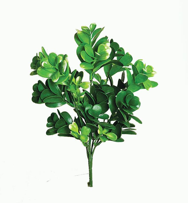 SBG6100GN - Succulent leaf bush x5