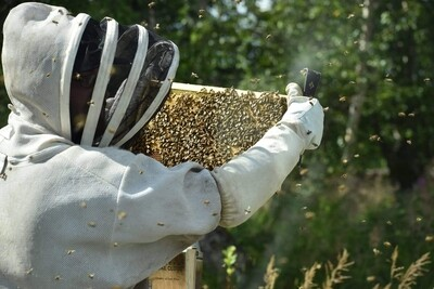 May 1st Bee Class in Wasilla