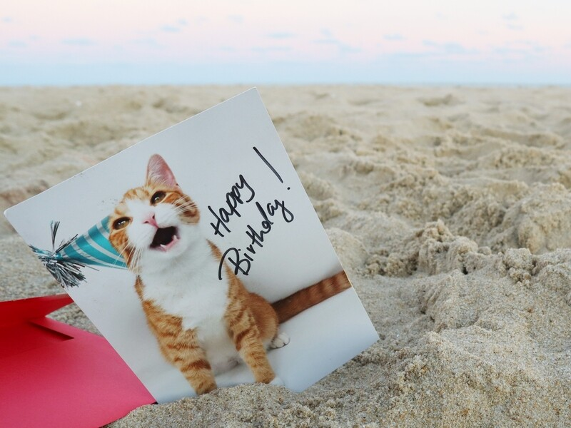 Pip the Beach Cat One-Sided Birthday Card (Personalization Included)