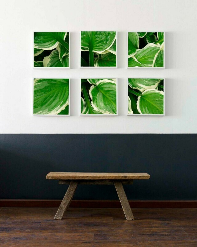 Hosta Gallery Wall