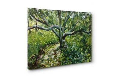 White Oak | Print on Canvas