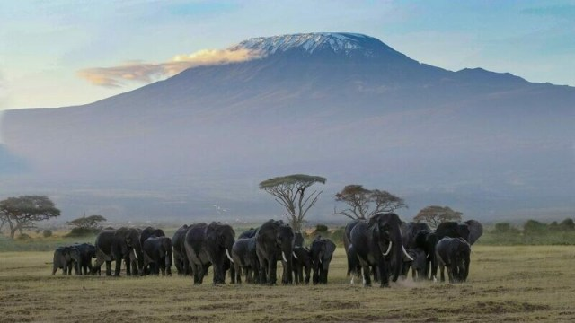 Mt Kilimanjaro Expedition - Hike & Safari - Deposit