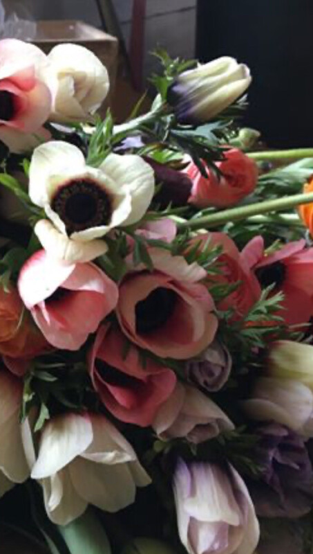 Anemone Corms For Cut Flower Production- Pastel Mix
