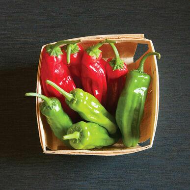Shishito Pepper Plant 4