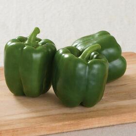 Bell Pepper Plant 4