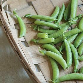 Snap Peas Vegetable Plant 4-pack