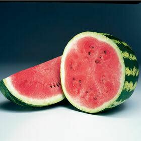Watermelon Plant 4
