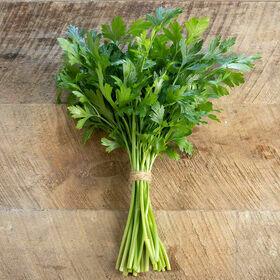 Parsley Herb Plant 4