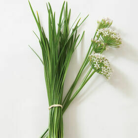 Onion Chives Herb Plant