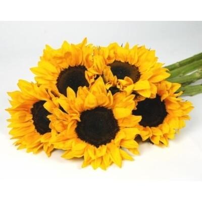 Sunflower cut-flower bunch