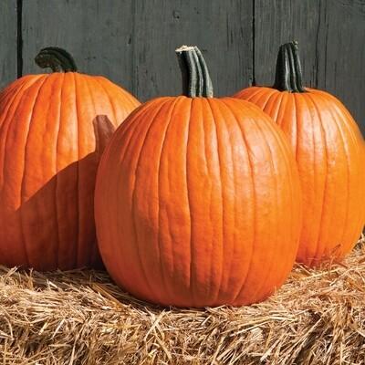 Pumpkin - Orange