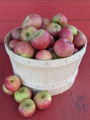 Pick-Your-Own Apples (Deluxe 1 Peck Basket)