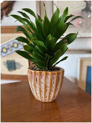 Vintage Pot with Plant