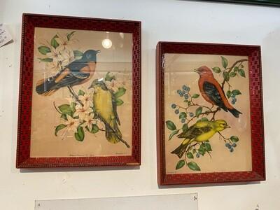 Vintage Pair of 1950's Framed Signed Vincent Bird Prints