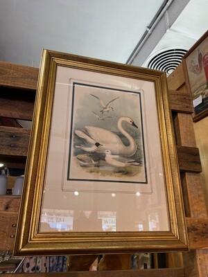 Vintage Framed & Matted Audubon Print