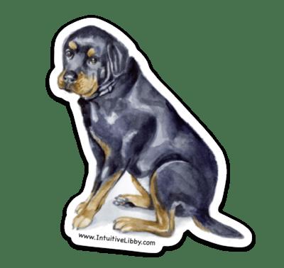 Dezi The Rottweiler Magnet