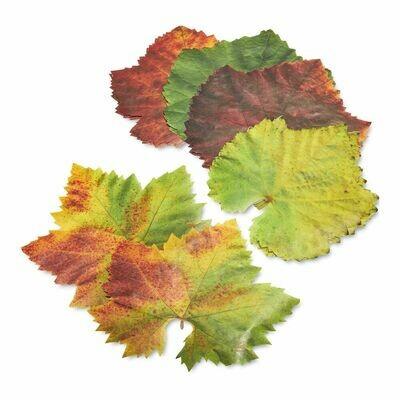 Parchment Leaves