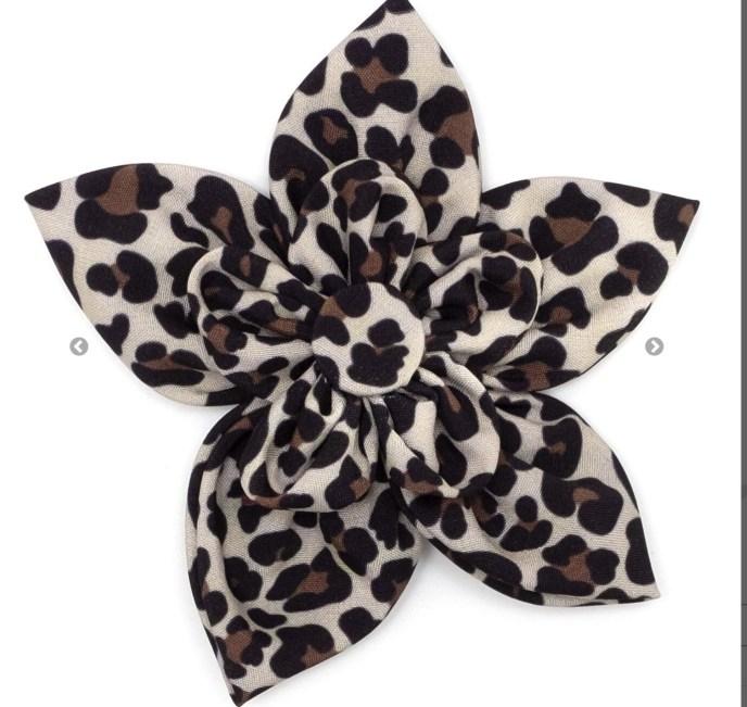 Leopard Flower-Dog