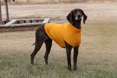 LG- Dog Sweater 50% Deposit