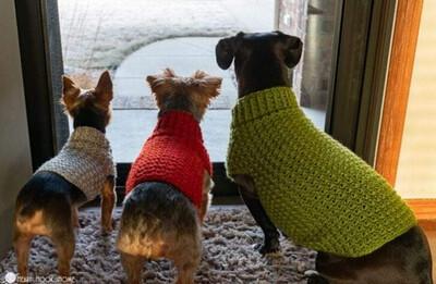 XS- Dog Sweater 50% Deposit