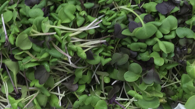 Pound Of Micro Radish Mix