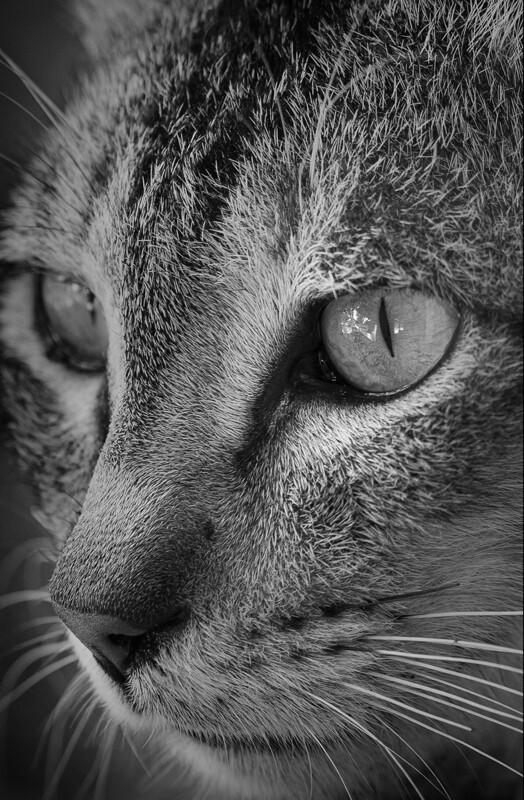 Kitten Profile 2018