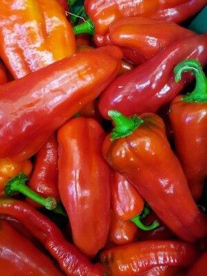 *Simple Gifts Farm SWEET FRYING PEPPER Red 1 lb