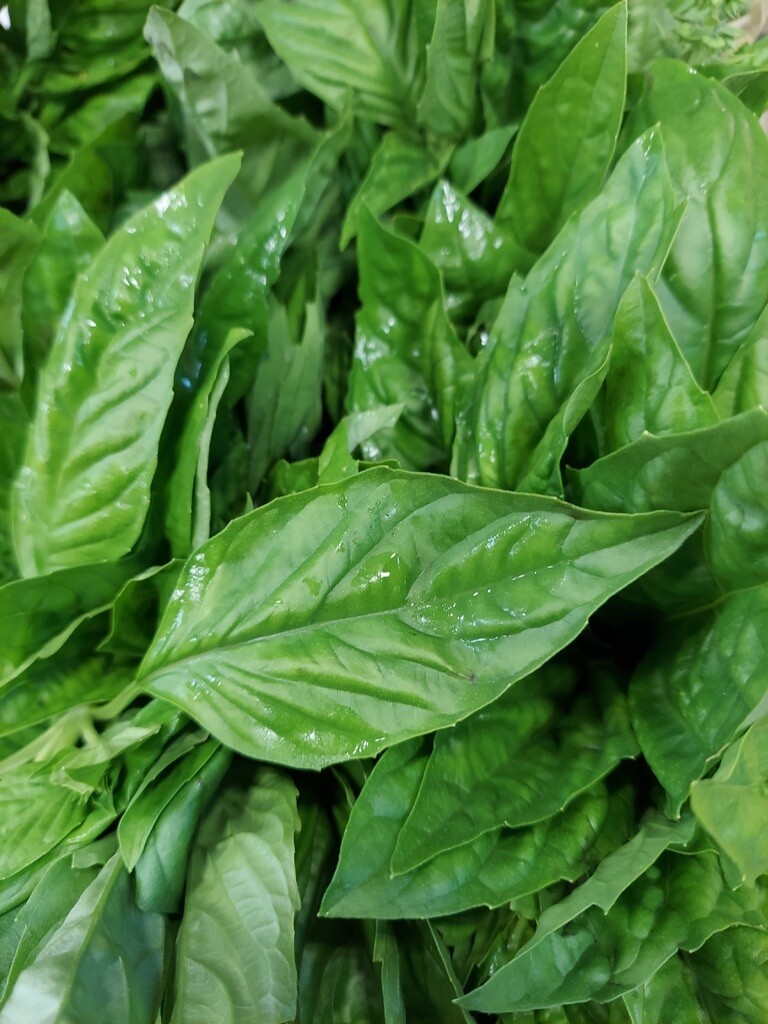 Basil - Bunched * Simple Gifts Farm
