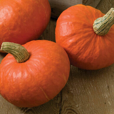 **SGF Red Kabocha Squash Small