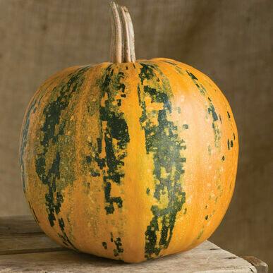 **SGF Kakai Seed Pumpkin (1 small)